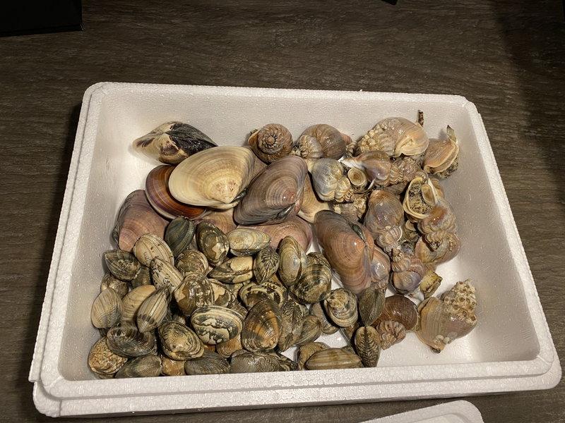 採れたて季節の貝類